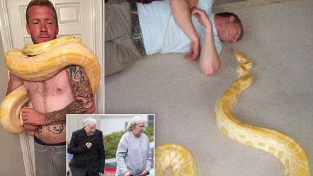 """""""Përqafimi i vdekjes"""", pitoni mbyt të zotin e fiksuar pas gjarpërinjëve (FOTO)"""