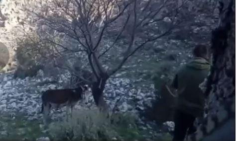 Plumb në kokë gomarit dhe e rrëzon në tokë, i riu nga Peqini filmon vetë aktin makabër (VIDEO)