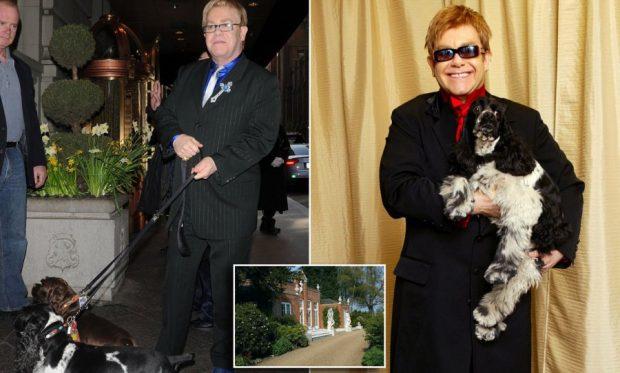 E mitura kafshohet në fytyrë nga qeni i Elton John! Këngëtari injoron situatën (FOTO)