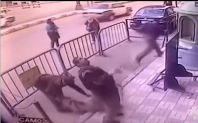 VIDEO/ Fëmija bie nga ballkoni i katit të 3, polici hero e shpëton