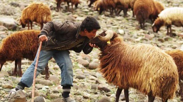 Nuk e dinit por ky multi-milioner shqiptar dikur ka qenë çoban (FOTO)