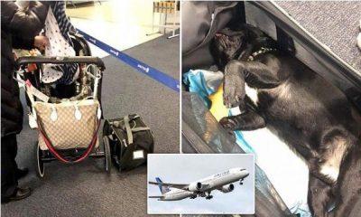 Ekuipazhi e detyron ta vendosi këlyshin në bagazhin e avionit, por ai….