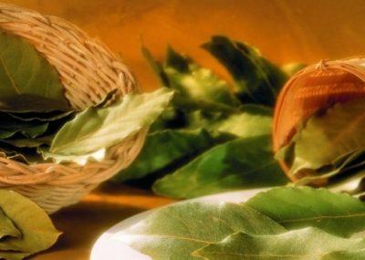 Çaj dafine me mjaltë, ja si ndikon në organizëm