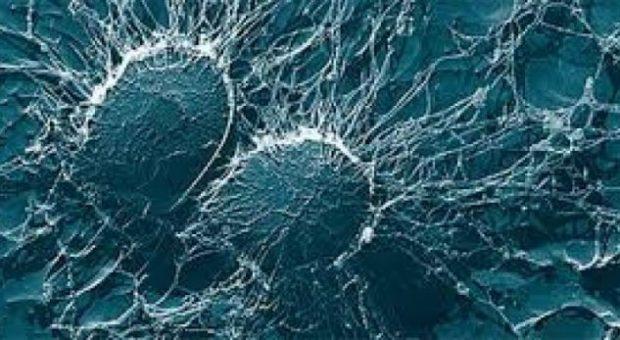 Bakteret e fshehura nën këmbët tona mund të jenë një armë e re kundër superbaktereve