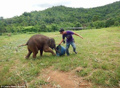 Ky elefant i vogël që qesh është gjëja më e bukur që do të shihni sot