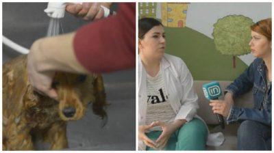 Këshillat e veterinerit për higjienën e qenushëve (VIDEO)