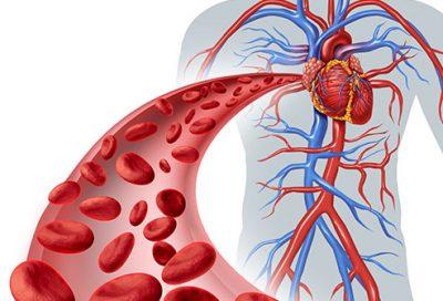 Si të përmirësoni qarkullimin e gjakut/ Ja çfarë duhet të bëni