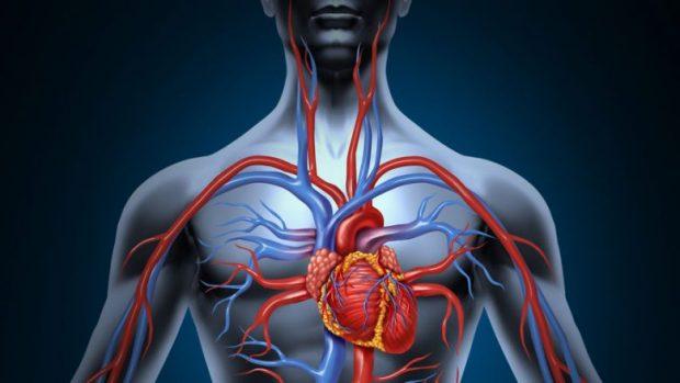 Sëmundjet që po marrin jetë, 12 mijë persona vdesin nga sëmundjet e trurit dhe zemrës (VIDEO)
