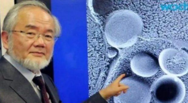 Shkencëtari Japonez, fitues i çmimit Nobel, tregon se si pastrohet trupi gjatë Ramazanit
