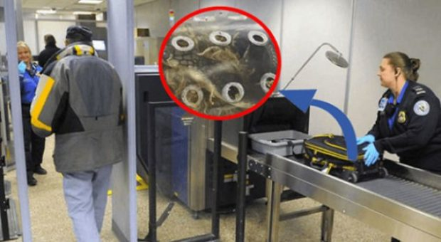 Kaloi valixhen në aeroport, ajo që kapën rrezet X i tmerruan të gjithë