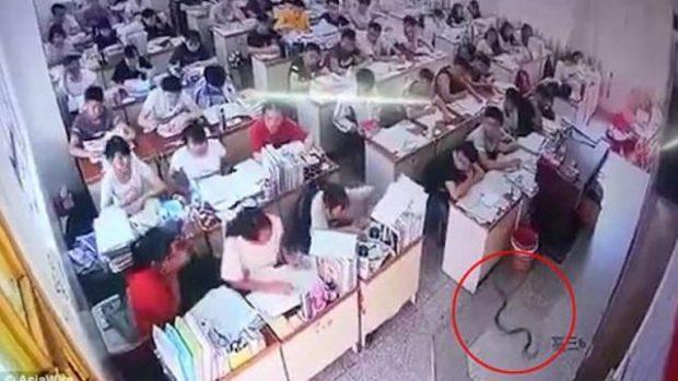 E FRIKSHME/ Gjarpri futet brenda në klasë, tmerrohen nxënësit (VIDEO)