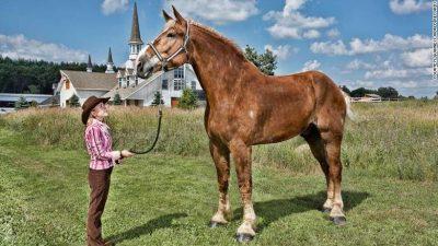THYEN REKORDIN/ Njihuni me kalin më të gjatë në botë (FOTO)