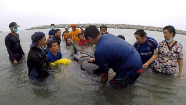 E TRISHTË/ Ngordh balena, kishte ngrënë 80 qese plastike (FOTO)