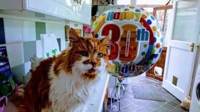 Maçoku më i vjetër në botë feston 30-vjetorin e lindjes (FOTO)