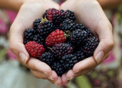 Manaferrat fruti plot me vlera ushqyese/ Ja të mirat që sjellë në shëndet