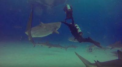 Instruktori i zhytjes shpëton nxënësin e tij nga kafshimi vdekjeprurës! VIDEO po bën xhiron e rrjetit…