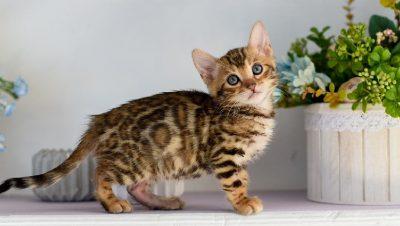 """""""Macet nuk janë kafshë shtëpiake""""/ Studimi i fundit që po tremb njerëzit"""