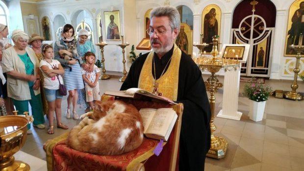 Prifti bekon dhjetra mace