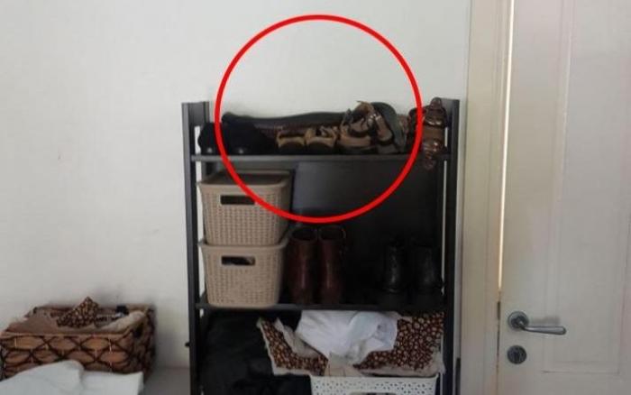 E RËNDË/ Familja e gjen gjarprin helmues në raftin e këpucëve