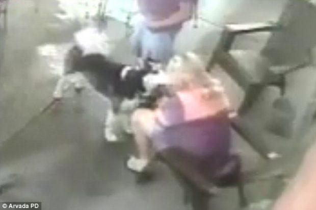 Kujdes kur përkëdhelni qenin e huaj, kjo grua u kafshua në fytyrë