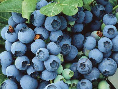 Ushqimet blu/ Zbuloni arsyet pse  duhet ti hani sa herë të mundeni