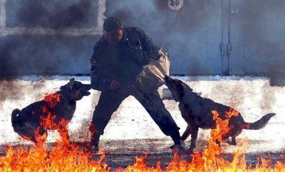 STËRVITJA E EGËR E FORCAVE SPECIALE RUSE/ Luftë me qen të tërbuar (FOTO)