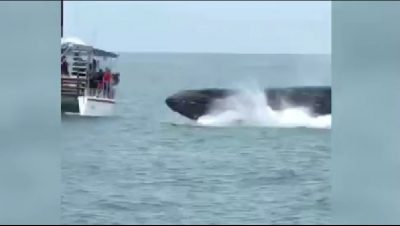 FRIKËSOHEN TURISTËT/ Balena gjigande u kërcen para varkës (VIDEO)