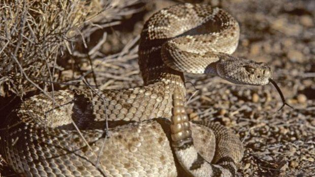 E PABESUESHME/ Bllokohet në minierë me këmbë të thyera dhe i rrethuar nga gjarpërinjtë