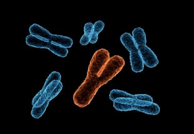 ÇFARË DO TË NDODHË ME MESHKUJT? Kromozomi Y është në zhdukje