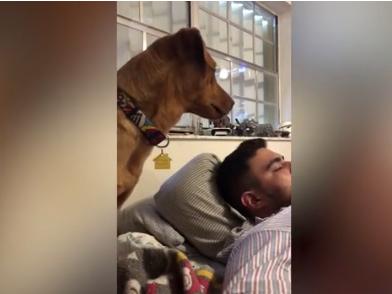 VIDEO QESHARAKE/ Qeni nuk e lejon të zotin që të përdorë telefonin