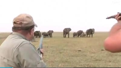 """""""E QËLLOVE NË SY""""/ Kjo video tregon momentin kur gjuetarët vrasin një elefant gjigand"""