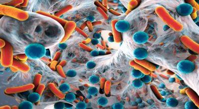 ZBULIMI I FUNDIT NGA SHKENCËTARËT/ Rezistenca ndaj antibiotikëve është reagim i zorrëve