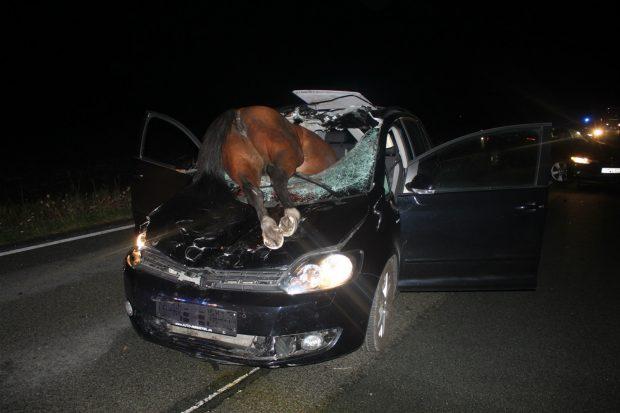 AKSIDENTI I PAZAKONTË/ Dy kuaj përplasen me makinën dhe… (FOTO)