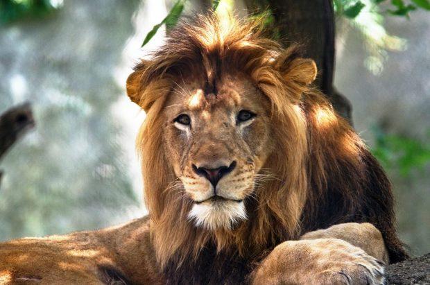 E PAZAKONTË/ Luanesha vret babain e tre këlyshëve të saj