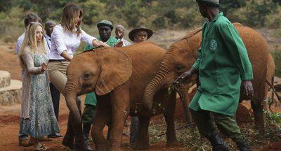 ZONJËS SË PARË TË AMERIKËS I NDODH E PAPRITURA/ E godet elefanti dhe humb balancën