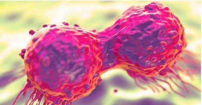 LUFTA KUNDËR KANCERIT/ Gjendet kodi i vetëshkatërrimit të qelizave