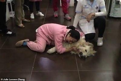 PREKËSE/ Gruaja i jep lumtumirën qenit që u vra nga fqinjët (FOTO)