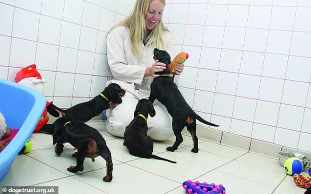 PUNA E ËNDËRRAVE/ 100 dollarë në orë për të luajtur me qentë