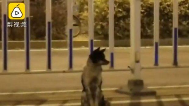 E DHIMBSHME/ Qeni besnik pret pronarin në rrugë prej 80 ditësh, por ai ka vdekur (VIDEO)