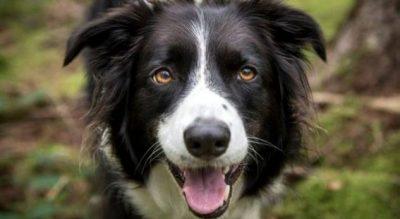 A është e mirë për shëndetin mbajtja e qenit?