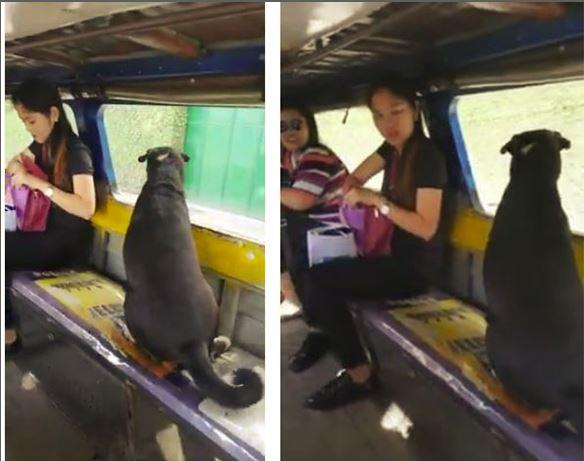 Familja shkon në ekskursion dhe lë qenin në shtëpi/ Ai merr autobusin dhe i bashkohet (VIDEO)