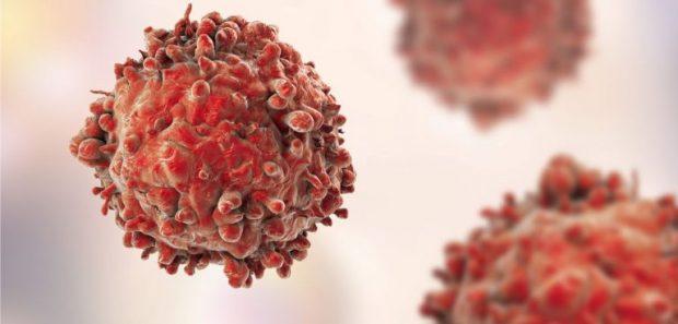 NUK E DINIM/ Të gjithë e hamë por ky produkt ushqimor shumon qelizat e kancerit