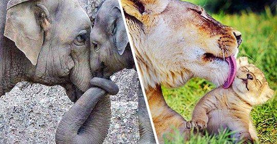 """""""ÇASTE TË NGROHTA""""/ Dashurinë e nënës e dinë edhe kafshët (FOTO)"""