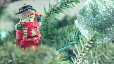 STUDIMI I FUNDIT/ Pema juaj e Krishtlindjeve mund të shpëtojë planetin