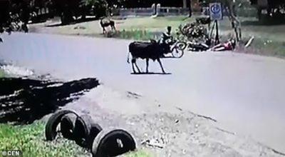 """PAMJET VIRALE/ Lopa me stilin """"kung fu"""" fluturon motoristen (VIDEO)"""