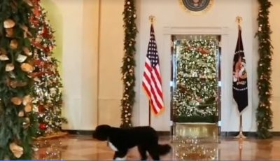 NJIHUNI ME ROLIN E TYRE/ Këto janë kafshët shtëpiake të Shtëpisë së Bardhë (VIDEO)