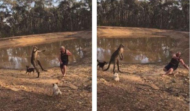 KANGURI SULMON QENTË E TIJ/ Burri përballet me kafshën pa lëshuar birrën nga dora (VIDEO)