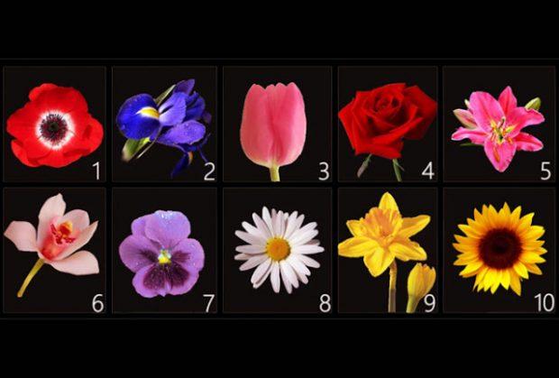 MOS U ÇUDISNI/ Zgjidhni një lule dhe zbuloni sekretet tuaja më të fshehta