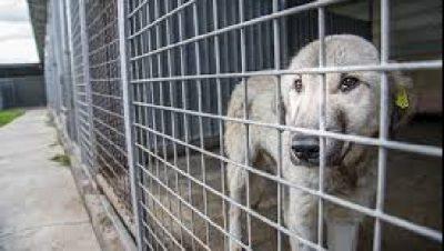 IKËN PËR PUSHIME/ Kafshët hanë njëra tjetrën për të mbijetuar, në pranga pronari i një qendre strehimi kafshësh