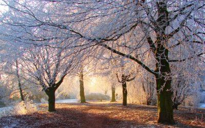 SFIDONI TË FTOHTIN/ 10 përfitimet e shëtitjeve në temperatura të ulta